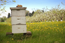 Bee hive_web