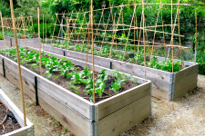 Vegetables_raised bed_trellis_climbing_web