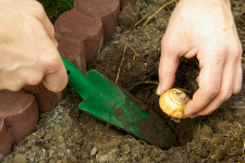 Bulbs_Planting 2_web