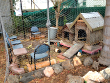Guinea pig pen with seats for the kids.
